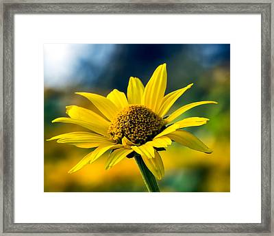 Bokeh Beauty Framed Print