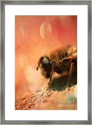 Bokeh Bee Framed Print by Lee-Anne Rafferty-Evans