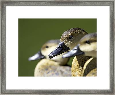 Bokehlicious Ducks Framed Print