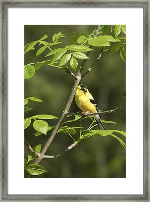 Bold And Beautiful Framed Print by Robert Camp