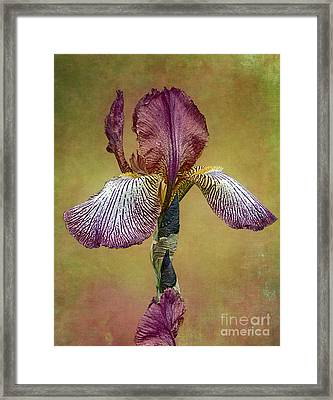 Framed Print featuring the photograph Bold Iris by Vicki DeVico