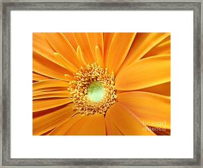 Boldly She Goes Framed Print