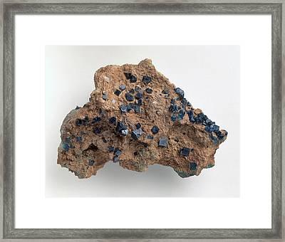 Boleite Crystals In Gypsum Groundmass Framed Print by Dorling Kindersley/uig