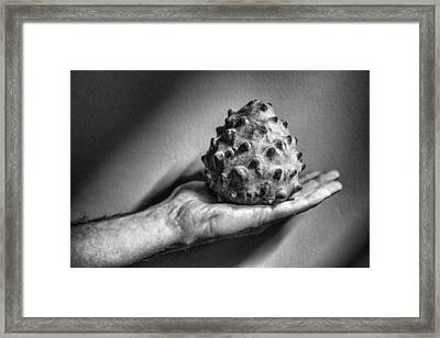 Bolivian Chirimoya Framed Print by For Ninety One Days