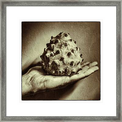 Bolivian Chirimoya In Sucre Framed Print by For Ninety One Days