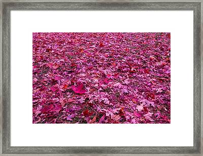Pink Leaves Framed Print by Abdullah Alnassrallah