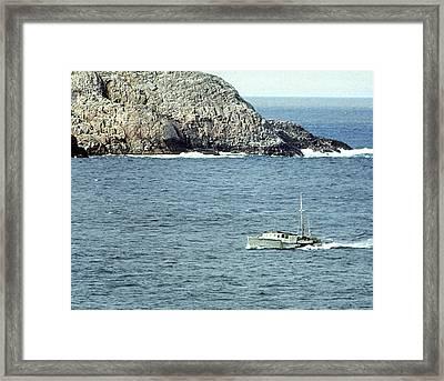 Bonavista Fisherman Framed Print