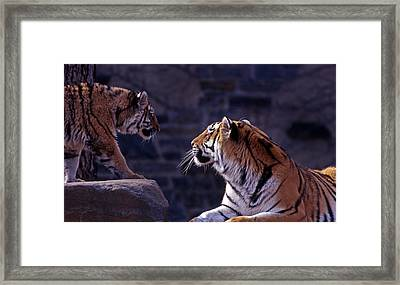 Bonding Framed Print by Skip Willits
