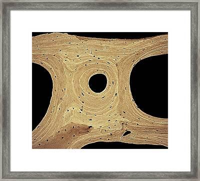 Bone Framed Print