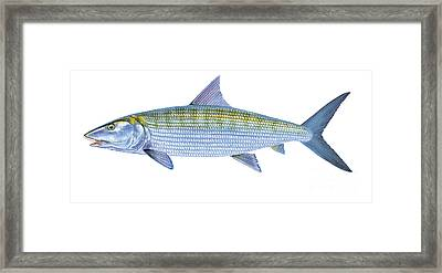 Bonefish Framed Print by Carey Chen