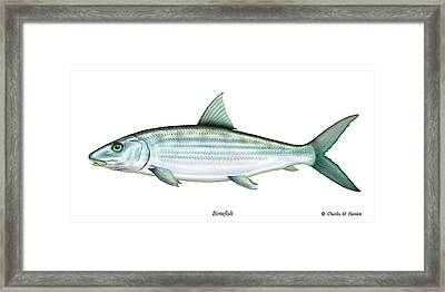 Bonefish Framed Print by Charles Harden