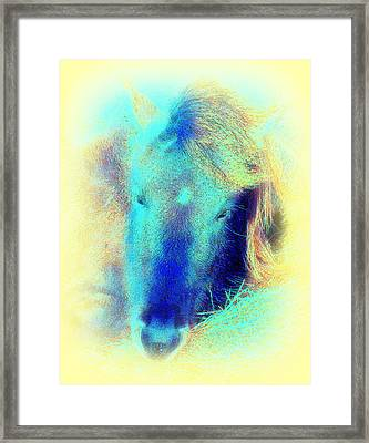 When We Are Playing The Horse Baby Blues  Framed Print