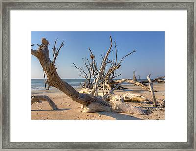 Framed Print featuring the photograph Boneyard Beach by Patricia Schaefer