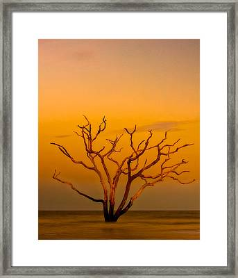Boneyard Framed Print