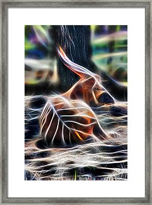 Bongo In Tune With The Energies Framed Print