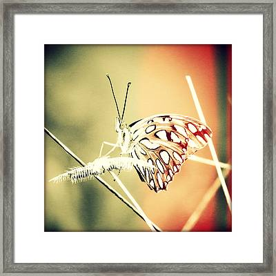 Bonita Beach Butterfly Sunset Framed Print