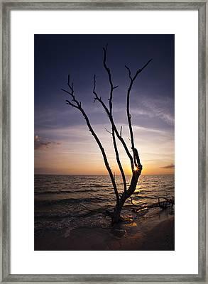 Bonita Beach Tree Framed Print by Bradley R Youngberg