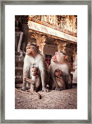 Bonnet Macaques And Young Framed Print
