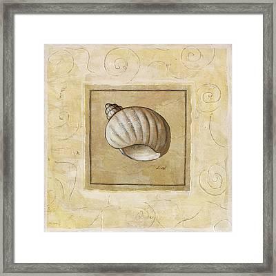 Bonnet Shell Framed Print by Pablo Esteban