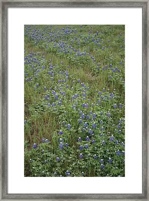 Bonnets In Blue Framed Print by Paulette Maffucci