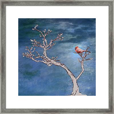 Bonsai Cardinal Framed Print by John Haldane