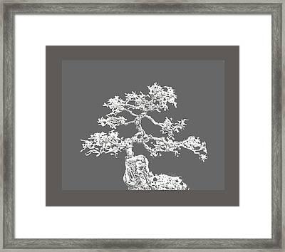 Bonsai II Framed Print by Ann Powell