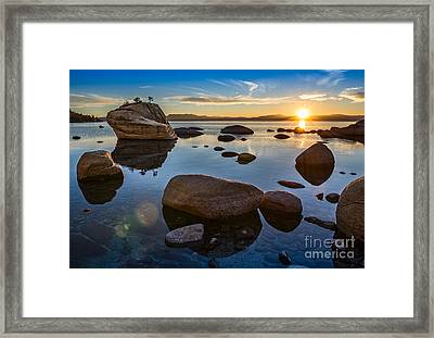 Bonsai Star Framed Print by Jamie Pham