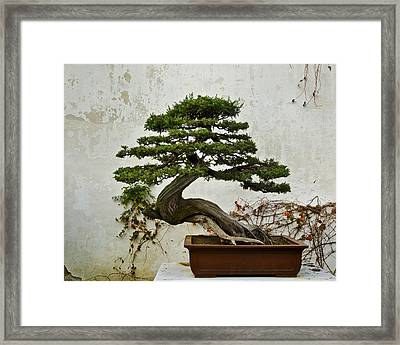 Framed Print featuring the photograph Bonsai Suzhou China by Sally Ross