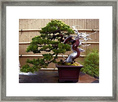 Bonsai Tree And Bamboo Fence Framed Print by Elaine Plesser