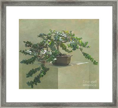 Bonsai Tree Framed Print by Arlene Carmel