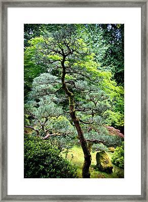Bonsai Tree Framed Print