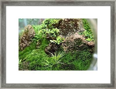 Bonsai Treet - Us Botanic Garden - 01134 Framed Print