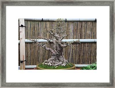 Bonsai Treet - Us Botanic Garden - 01137 Framed Print
