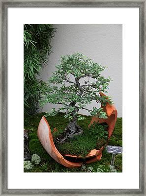 Bonsai Treet - Us Botanic Garden - 01138 Framed Print