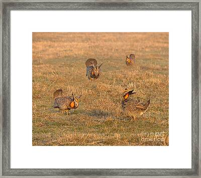 Booming For Love Framed Print by Teresa A and Preston S Cole Photography