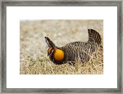 Booming Framed Print by Jill Bell