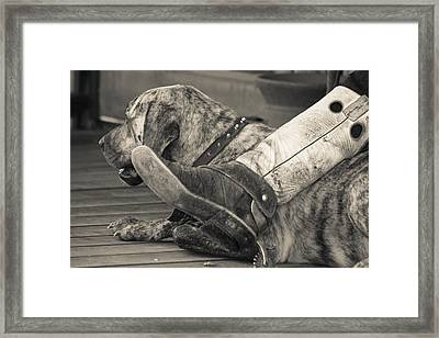 Framed Print featuring the photograph Boot Scootin by Steven Bateson