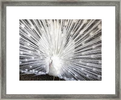 Framed Print featuring the photograph Booya by Tammy Espino