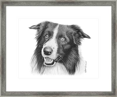 Border Collie -030 Framed Print by Abbey Noelle