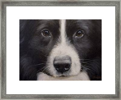 Border Collie Close Up Framed Print by John Silver