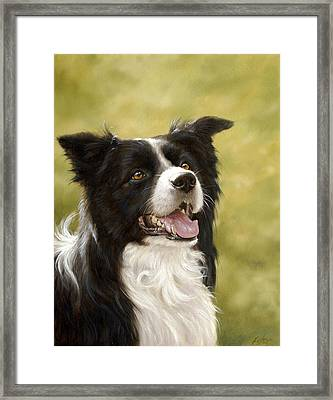 Border Collie Head Study Framed Print by John Silver