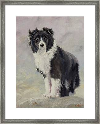 Border Collie Portrait IIi Framed Print by John Silver