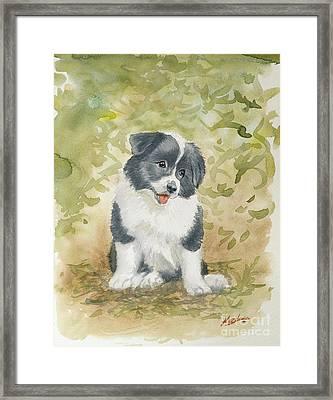Border Collie Pup Portrait II Framed Print by John Silver