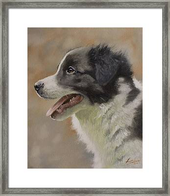 Border Collie Pup Portrait IIi Framed Print by John Silver