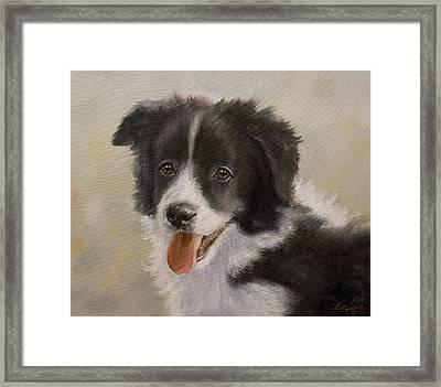 Border Collie Pup Portrait Iv Framed Print by John Silver