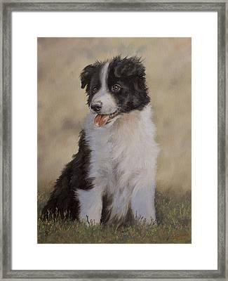Border Collie Pup Portrait V Framed Print by John Silver