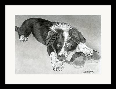 Toy Dog Drawings Framed Prints