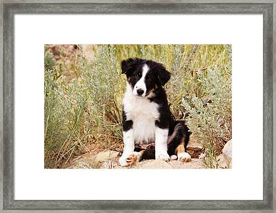 Border Collie Puppy Sitting On Rock Framed Print by Piperanne Worcester
