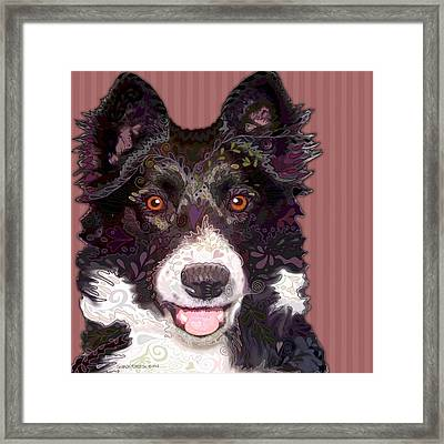 Border Collie Framed Print by Sharon Marcella Marston