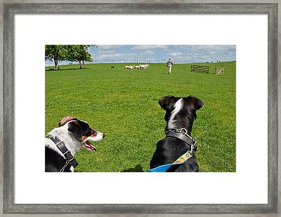 Framed Print featuring the photograph Border Collies by Dennis Cox WorldViews